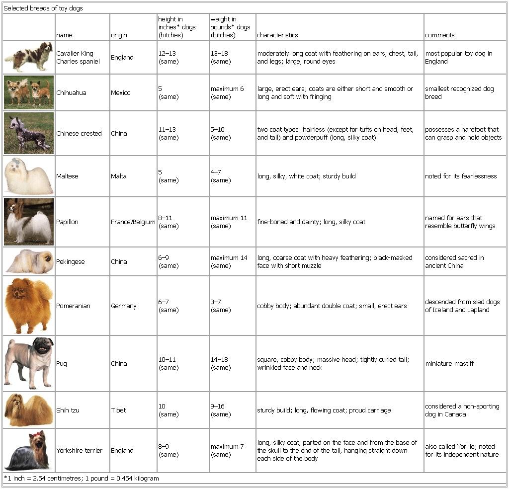 kilogram dogging